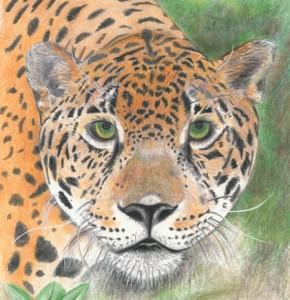 Session Two - Jaguar